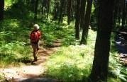 abantos senderos del duratón sl, La Granja, Camino de las Pesquerias Reales por el río Eresma, ruta guiada de educación ambiental y ecoturismo. Parque Nacional Sierra de Guadarrama, Green Segovia,