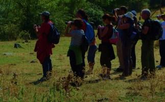 Rutas ornitológicas por Segovia